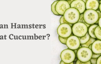 Can Hamsters Eat Cucumber_