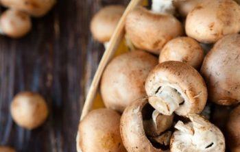 Can hamsters eat mushrooms
