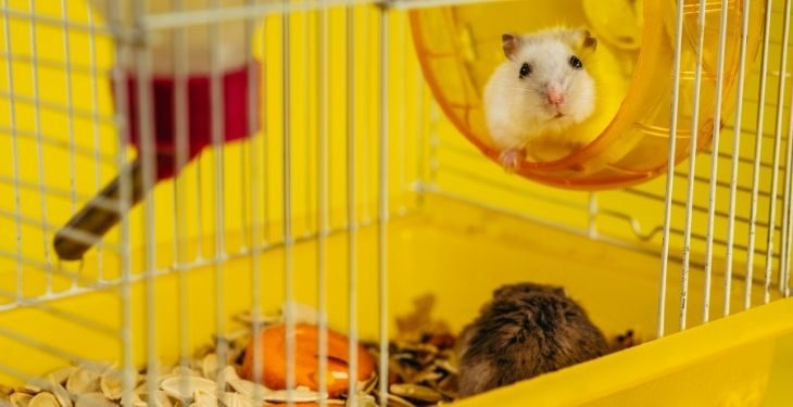 best syrian hamster cages
