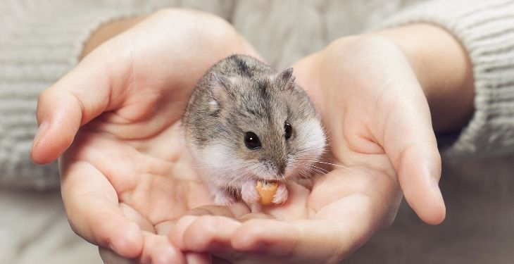 girl hamster name