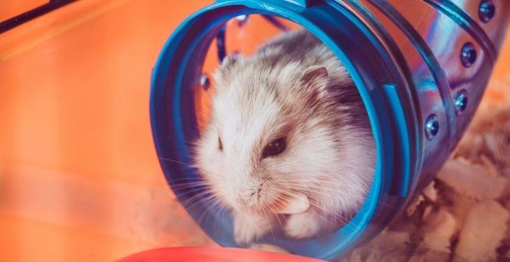 hamster tunnel