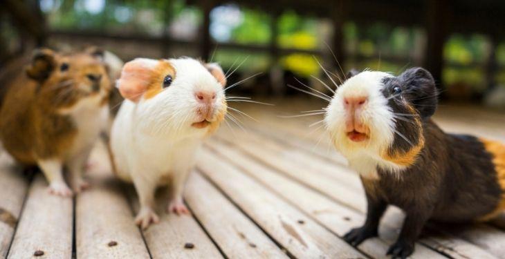 hamsters eat