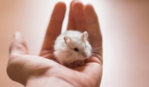 what to do if you drop your hamster